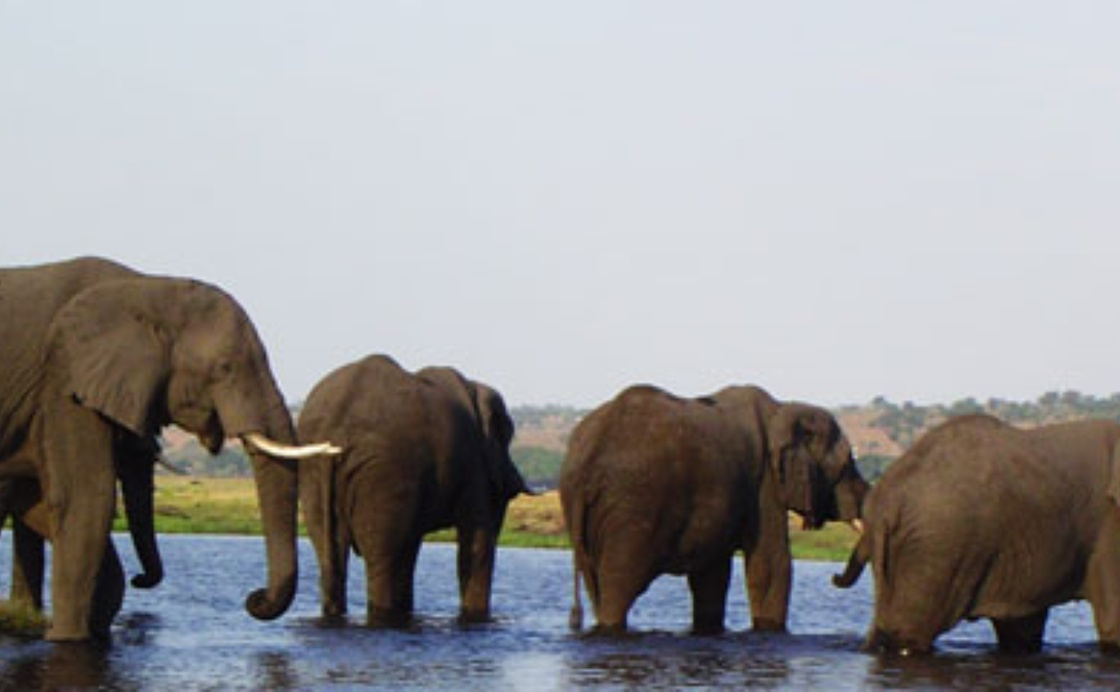 National tourism policy for Botswana